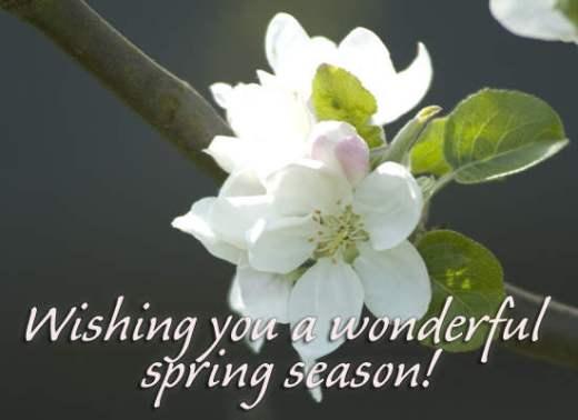 spring_040